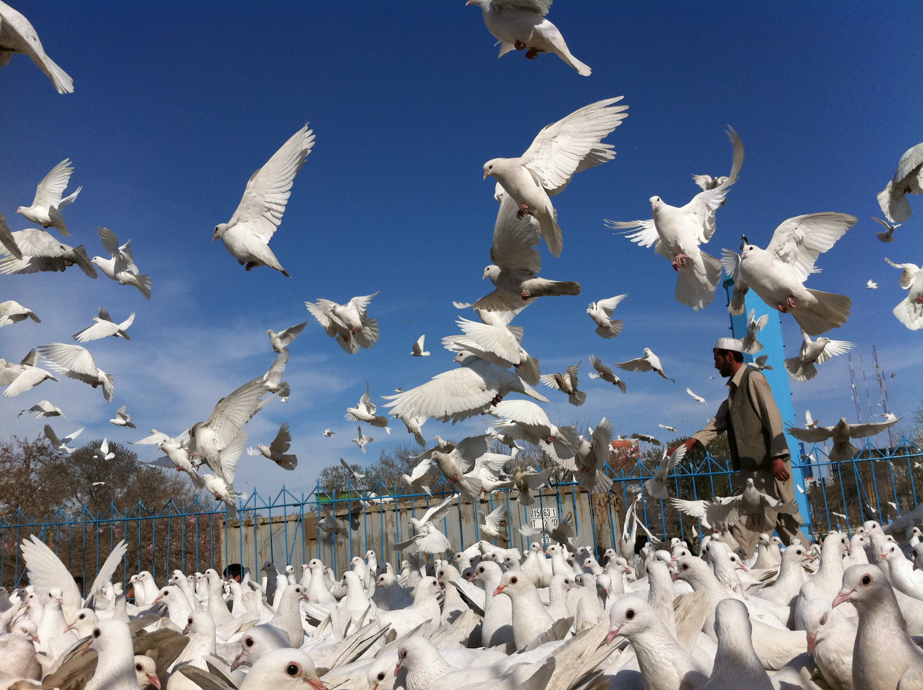 White Doves at  Blue Mosque in Mazar e Sharif  _ Wikimedia Commons